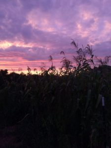 sunsetcorn_fall2016